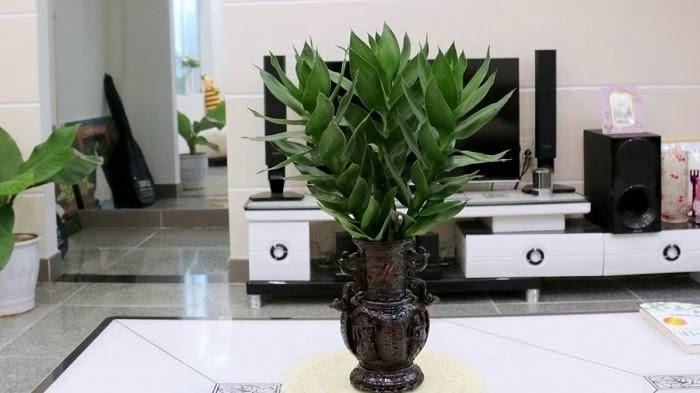 10 loại cây nên trồng trong nhà