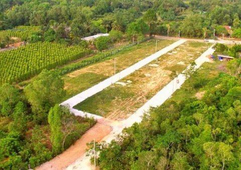 Quy hoạch đất trồng cây lâu năm có lên thổ cư được không
