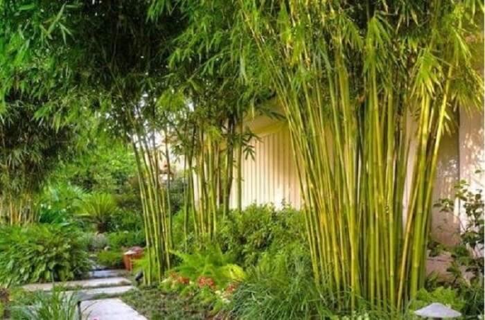 những loại cây nên trồng trước nhà