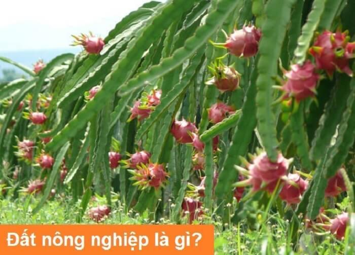 khai-niem-dat-nong-nghiep